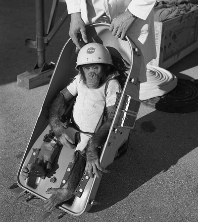 Ham, one of NASA's astrochimp test subjects